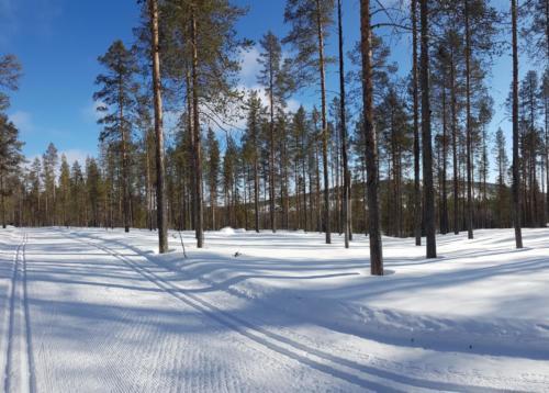 Cross-country Skiing Levi Ski Resort