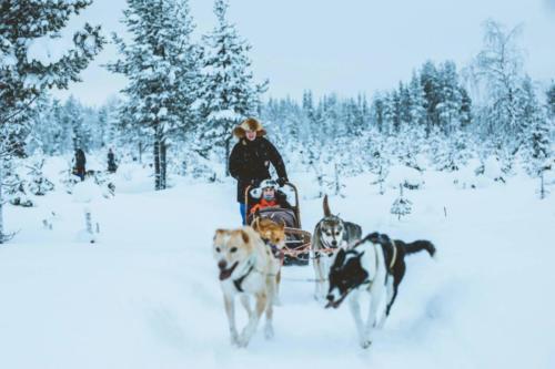 Husky Safari Levi Ski Resort